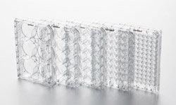 艾本德(Eppendorf) 细胞培养板,TC处理,独立包装
